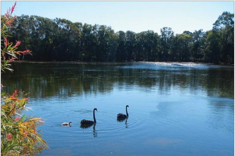 LakeSwan(binatour)